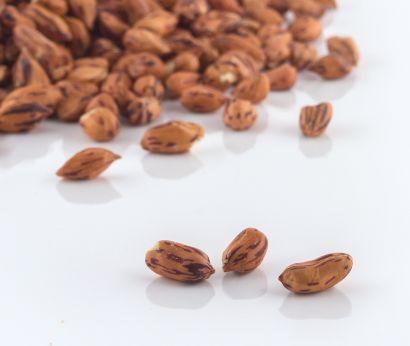 Wilde Erdnüsse