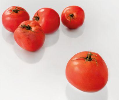 Setzlinge für verschiedene Tomaten