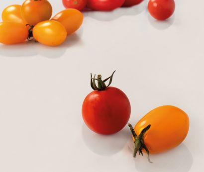 Setzlinge für Cherry-Tomaten